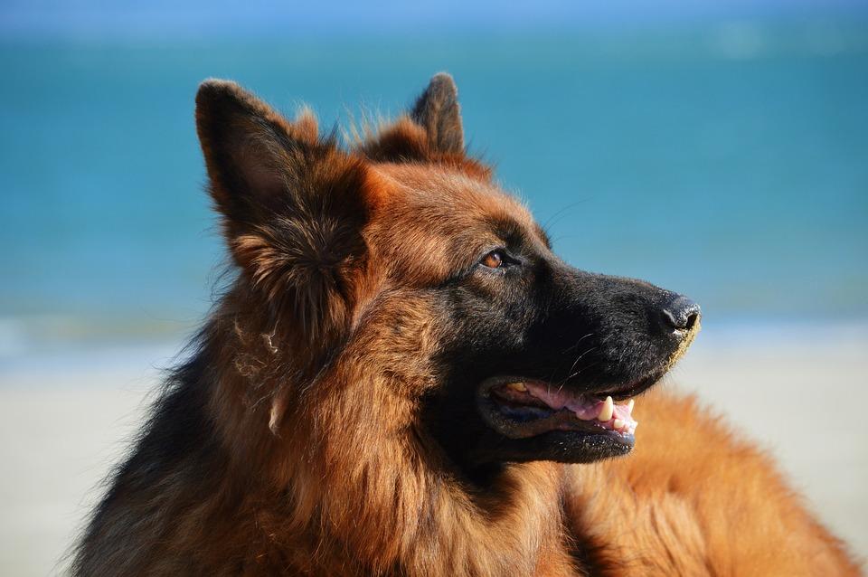 Käytösklinikka Onnellinen Koira