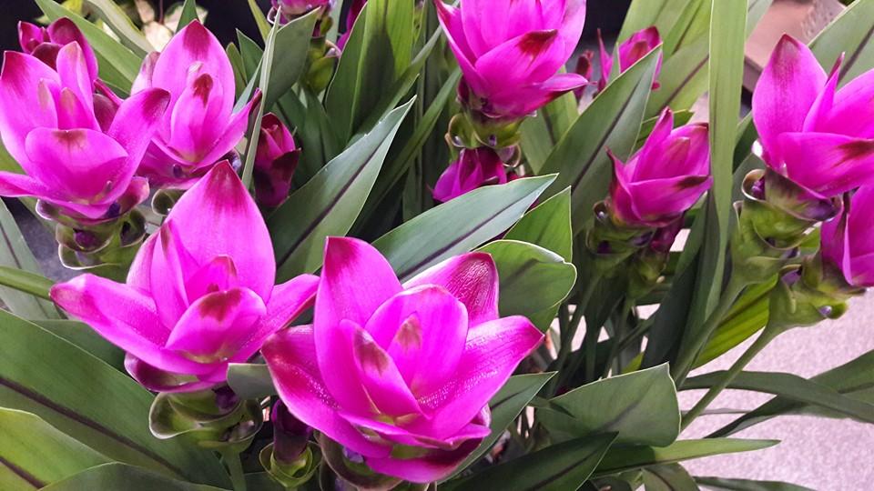 Kukkakauppa Pelakuu