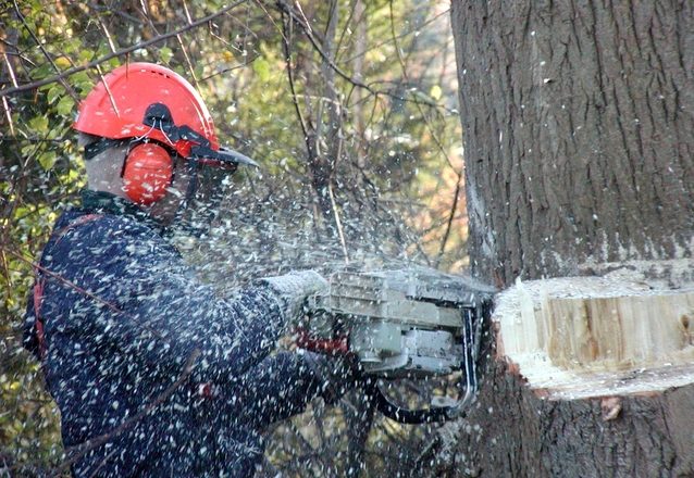 Metsäpalvelu Tampere